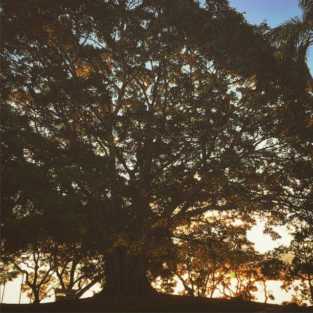 Bye, bye beautiful day!  #energy #lightworker #nature
