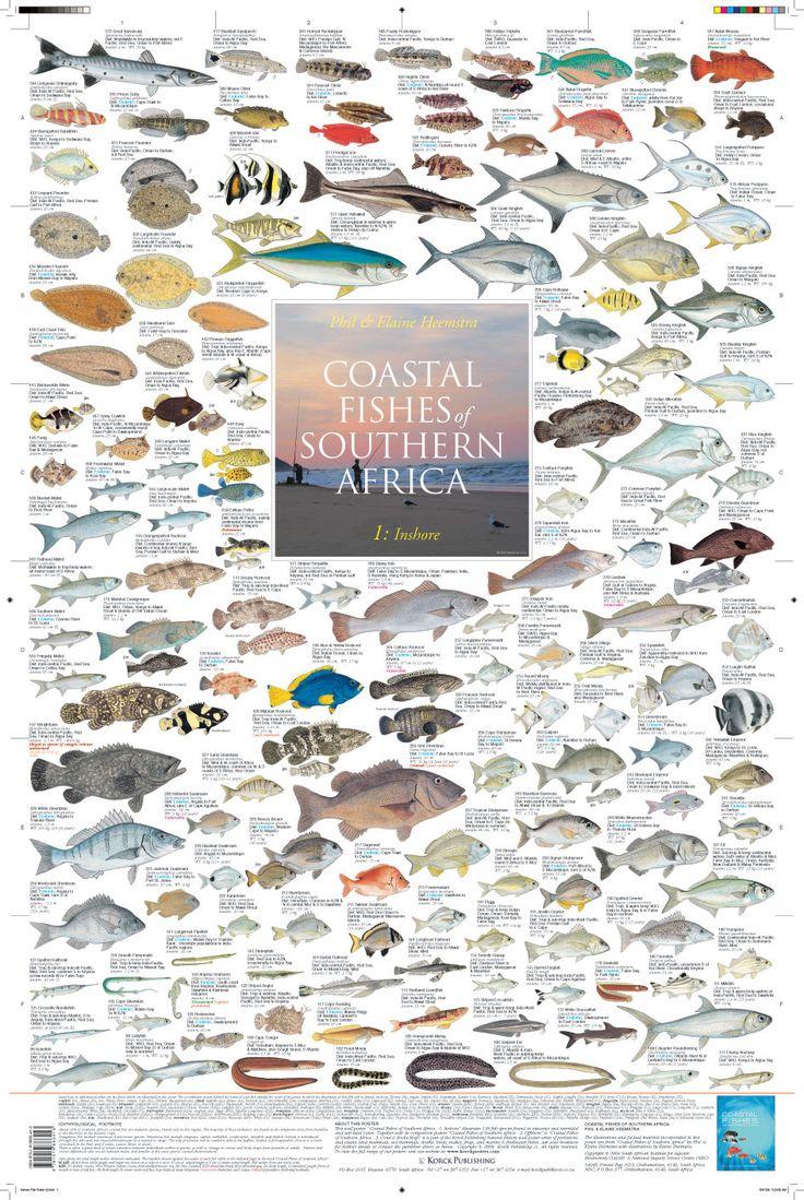 Freshwater fish of southern africa -  Coastal Fishes Of Southern Africa 1 Inshore 2010 Korck Publishing