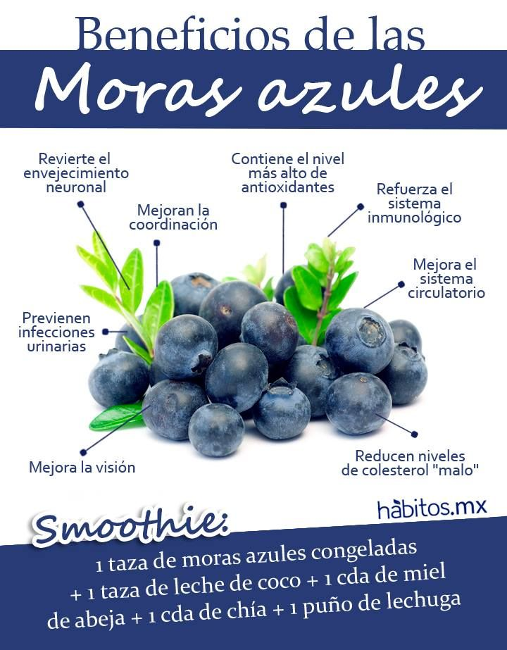 Hábitos Health Coaching | LOS BENEFICIOS DE LAS MORAS AZULES