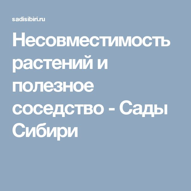 Несовместимость растений и полезное соседство - Сады Сибири