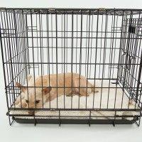 #dogalize Gabbie per cani: come funzionano e le tipologie #dogs #cats #pets