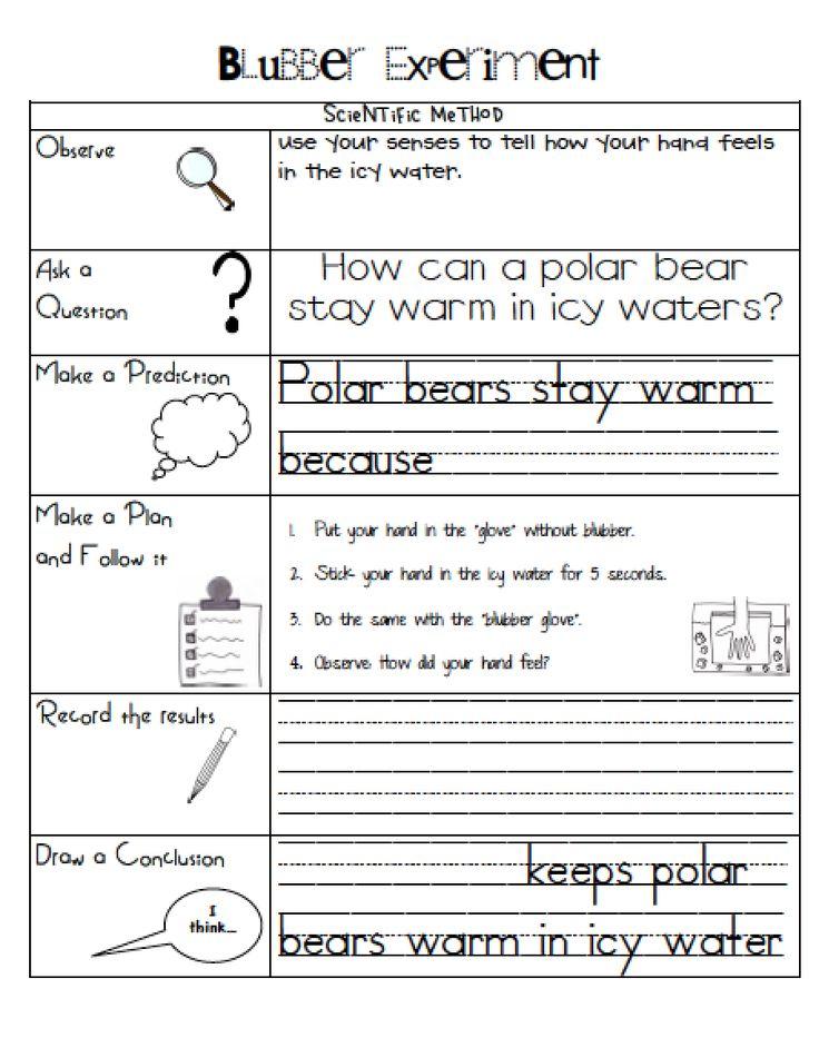 Sarah's First Grade Snippets: Polar Bear blubber experiment