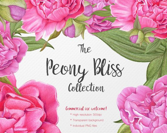 Peony Flower Clipart  Peony  Floral Clipart  PNG by JessicaOxleyAI