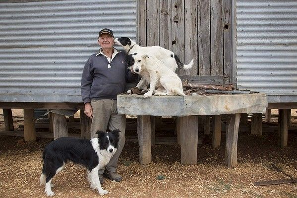"""David Hines of St Arnaud and his border collies outside his shed. Photo by Andrew Chapman from """"Working dogs"""""""