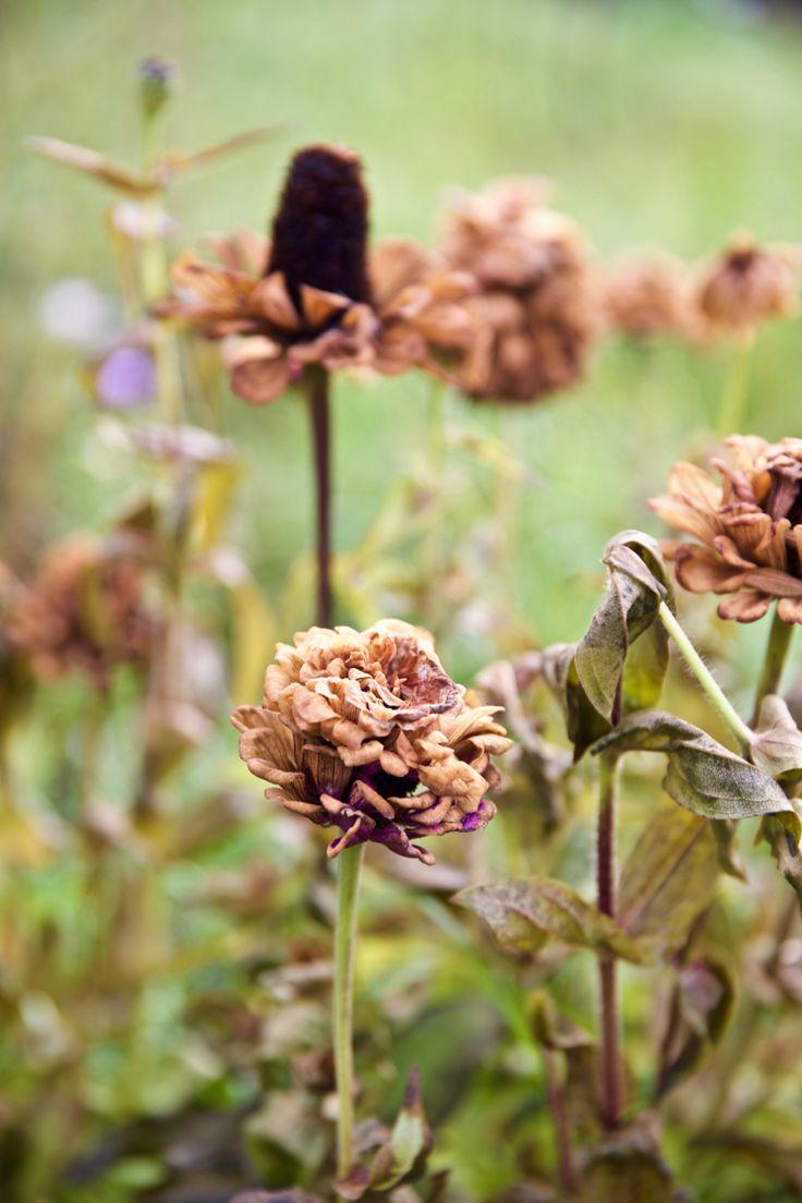 Поздние. осенние цветы. PH:Irina Maysova/Ирина Майсова/