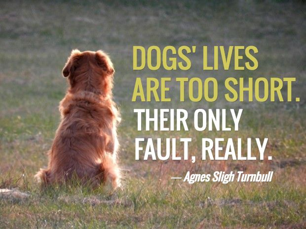 """Dogs lives are too short. Their only fault, really."" - Agnes Silgh Turnbull"