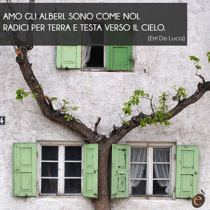 Un albero è alto, fiero e più invecchia più si dirama. Fai della casa il nido sull'albero della tua vita! #ericacasa #arredamento #quotes