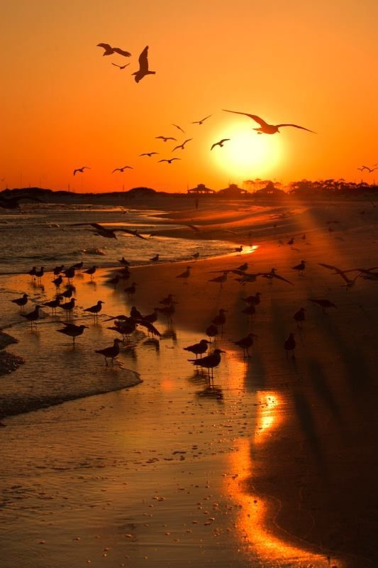 #Beach Sunset