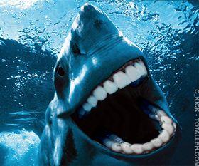 Tiburón con dientes humanos