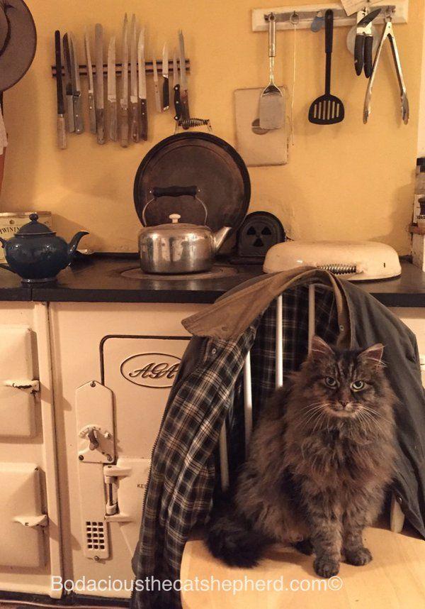 Cat Shepherd on Twitter Aga drying a