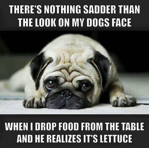 TOO funny! So true! #Pug