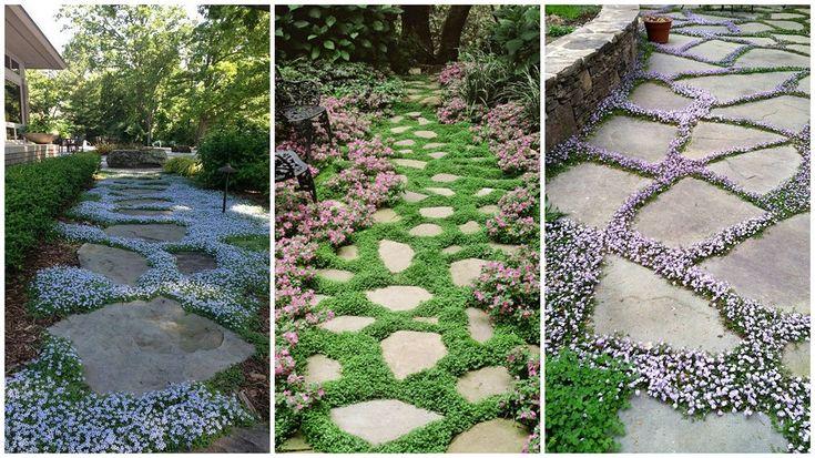 Mutatjuk a legszebb talajtakaró virágokat   Sokszínű vidék