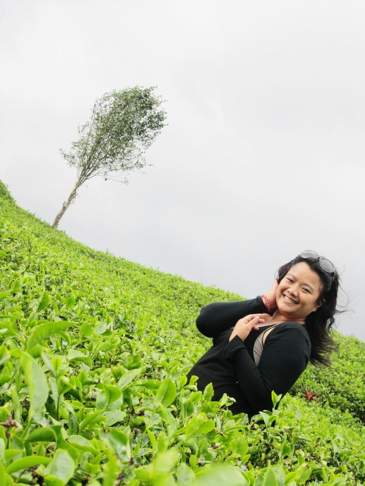 tea garden, Jawa barat