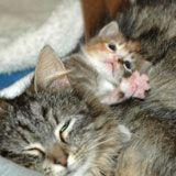 Kitten Progression - Fifth Week - Alley Cat Allies
