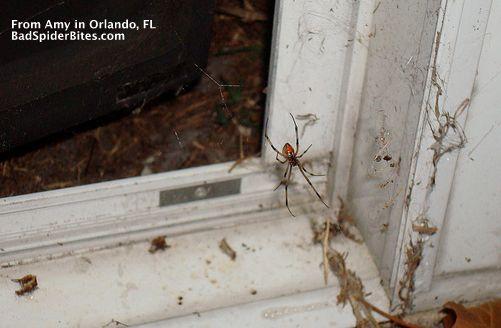 Amy Brown Widow Spider