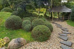 Старые деревья и Искусство «Бонсай» | Сады Северо-Запада