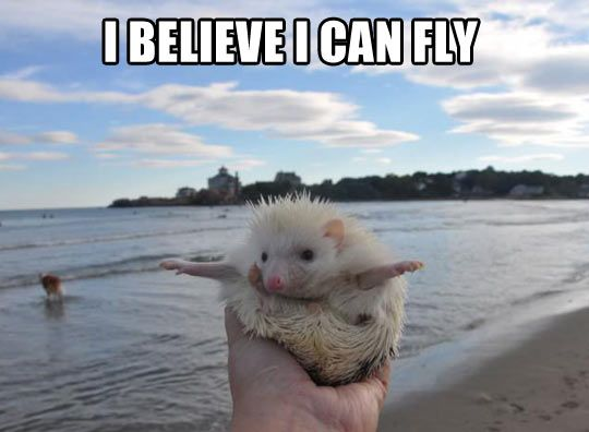 You go, Albino Hedgehog…