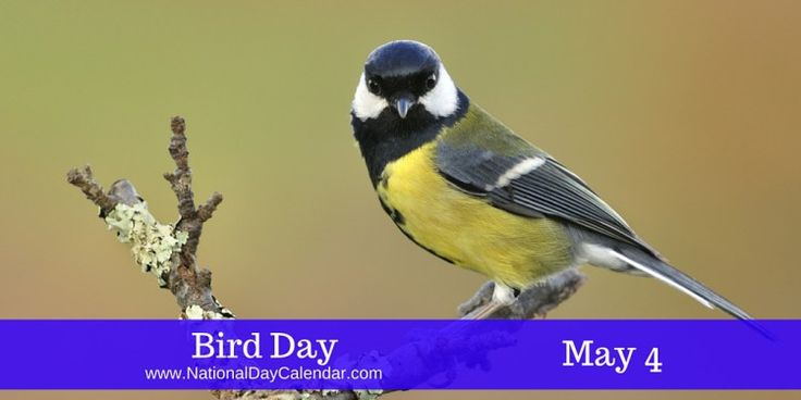 Dating all the way back to 1894 #BirdDay reveals you can find a lot of history within National Day Calendar...