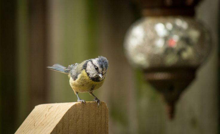 My yard Birds.