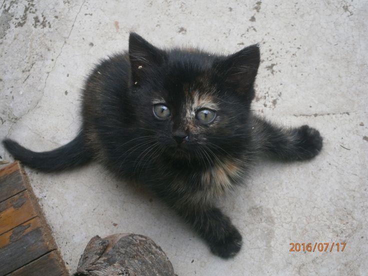 Kdo si troufne říct, že to není hezké kotě, ten už nikdy nedostane ani jeden lajk.