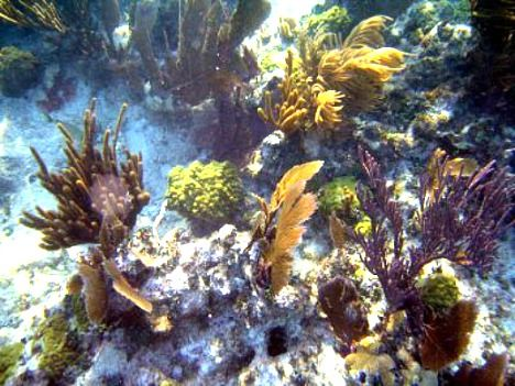 39 Best Ideas About Coral Reefs On Pinterest Snorkeling