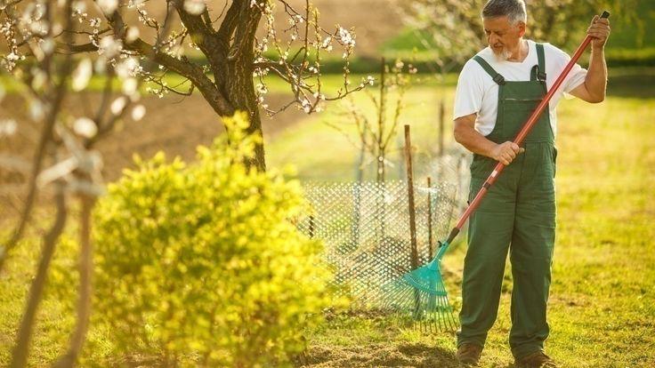 Moos im Rasen effektiv beseitigen: Die besten Tipps