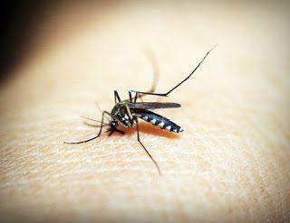 7 Priceless Malaria Information
