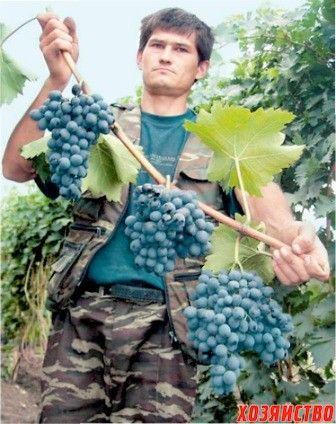 подкармливать виноград.jpg