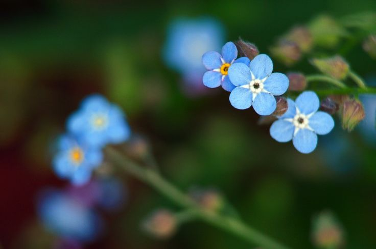 Soft Blue Flowers by Bob Betts on 500px
