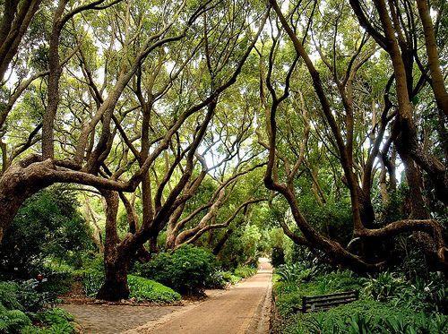 Kirstenbosch, South Africa