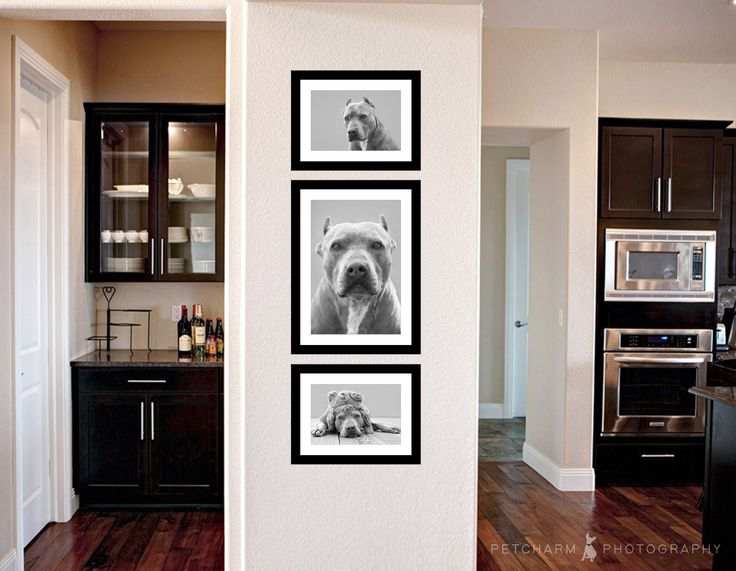 Two 8x10's and One 12x18 Framed Print | Wall Art Collection | @petcharmphoto