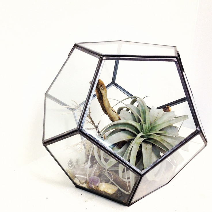 faceted terrarium by chaparral studio zimmerpflanzen pinterest zimmerpflanzen winter und deko. Black Bedroom Furniture Sets. Home Design Ideas