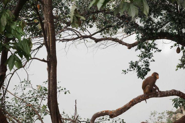 Monkey - Shen Wei