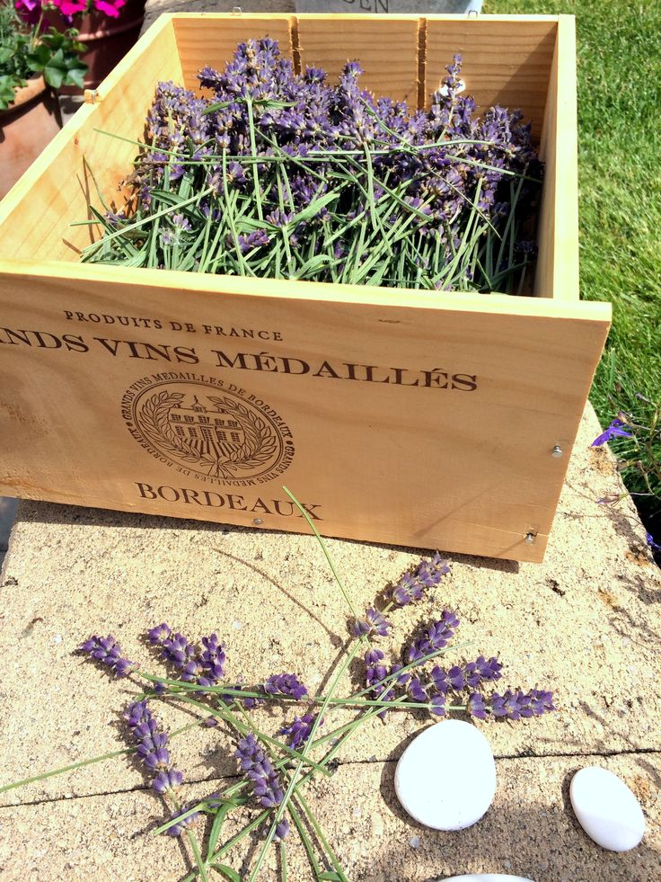 Lavanda. it's time to reap the smell.