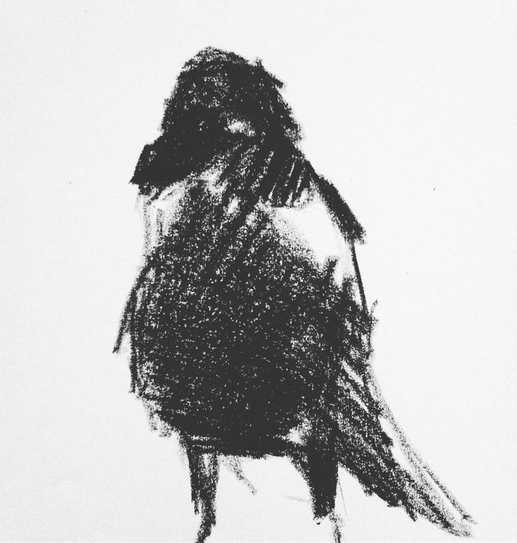 Crow scribble #scribble #crayons #crow #dark #contrast #illustration #abstract #form #art #bird