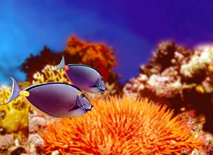 Le meraviglie del Mar Rosso...  #diving #sub #subacquea #MarRosso