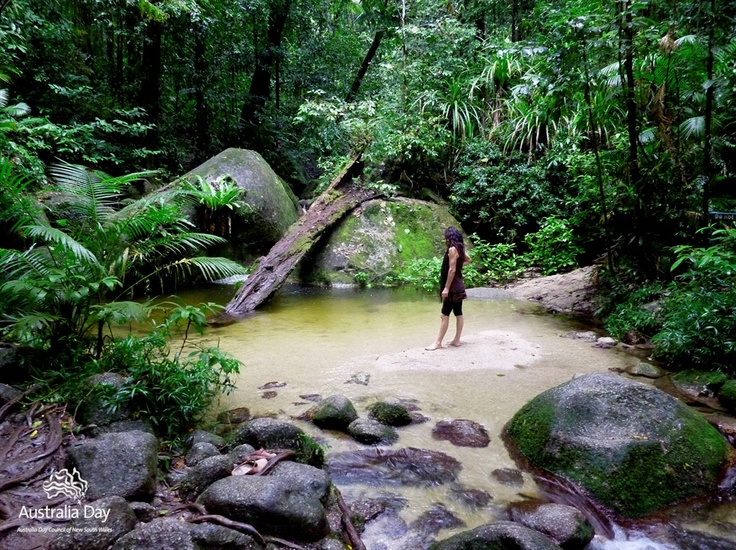 Daintree oasis