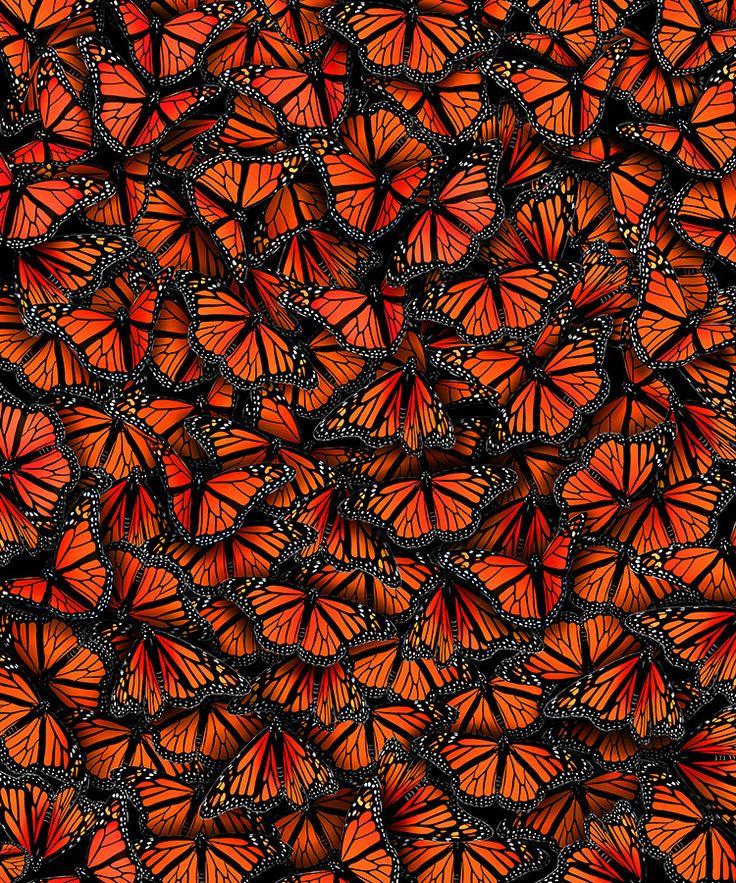 Elmira Amirova the monarch en masse... Mariposas pasando el invierno en Mexico... Belleza increible!