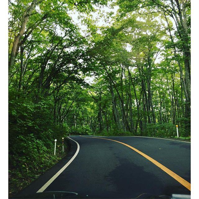 【araaraaraa_】さんのInstagramの写真をピンしています。《気持ちいいー(^o^) #大山#鳥取県#森林浴 #白樺 #シラカバ #森 #林 #森のトンネル #木々のトンネル #木々 #マイナスイオン #マイナスイオン浴びまくり #like4like #likeforlike #tottori #mountdaisen #whitebrich #tree #forest #woodentunnels #자작나무 #숲 #drive #드라이브 #돗토리 #터널》