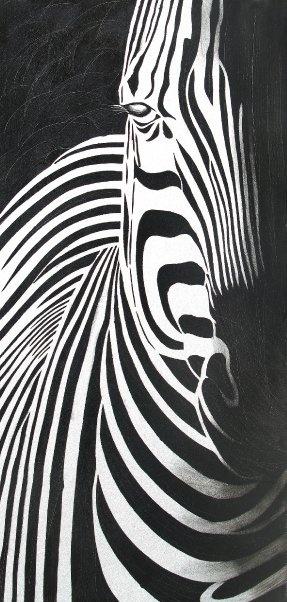 Wild life IFC3039-1  Distinct profile of an African Zebra