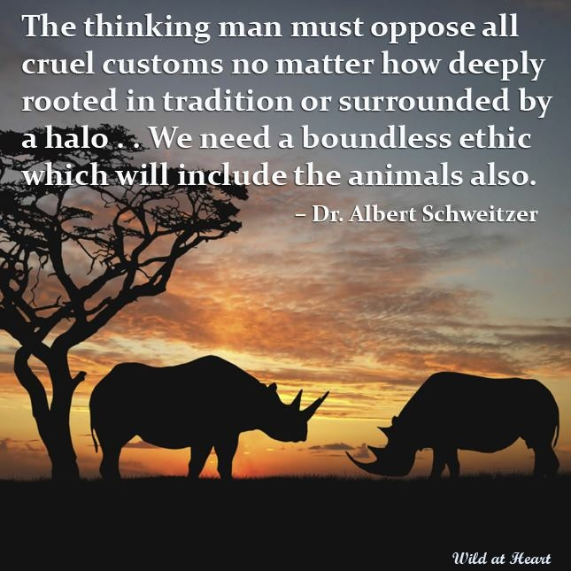 """""""The thinking man must oppose all cruel customs, no matter how deeply rooted in tradition or surrounded by a halo... we need a boundless ethic... which will include the animals also.""""  ~Dr. Albert Schweitzer"""