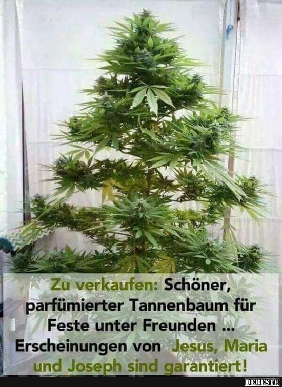 Weihnachtsbaum entsorgen lustig