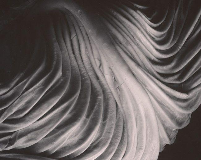 Edward Weston, Cabbage Leai, 1931 © 1981 Center for Creative Photography, Arizona Board of Regents