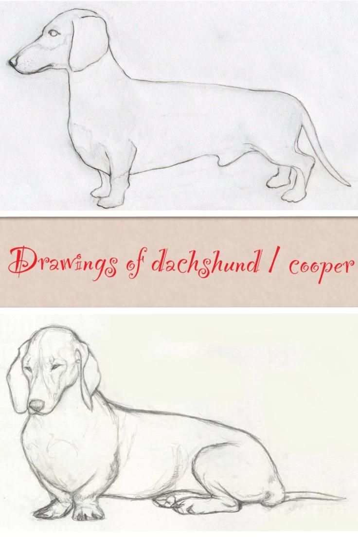 Dachshund Drawings In 2020 Dachshund Drawing Dachshund Art Animal Drawings