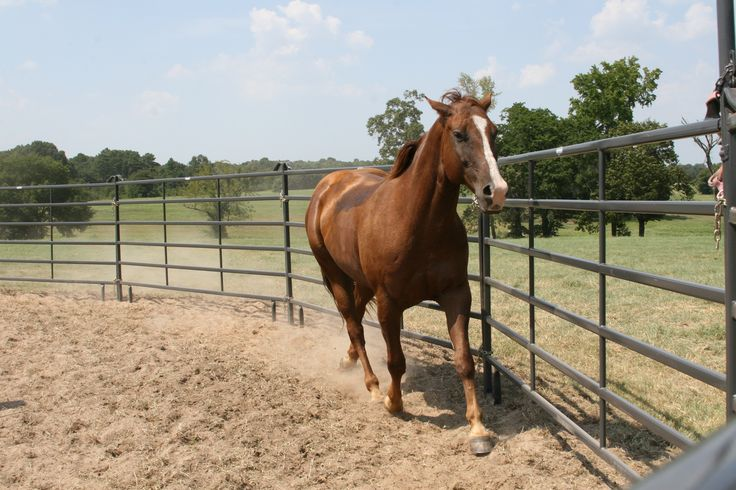Pound for pound, dollar for dollar, Priefert Premier Panels are the toughest panel on the market. Available in 40', 50', 60', and 70' diameters, Premier Round Pens are constructed from our patented Quadraform™ tubing to allow for maximum strength and flexibility and will fit the needs of most any horse owner looking for a safe environment for working horses.