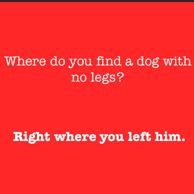 corny jokes that make you laugh - Yahoo Image Search Results