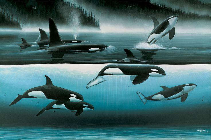 Pinterest Art Paintings Whales