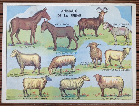 Vintage French School Poster Farm Animals & by wafflesandsprout