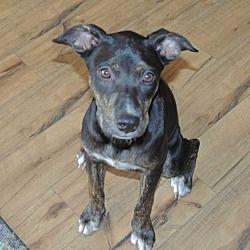 Pin by Lea Nichols on Helping Precious Animals Pet