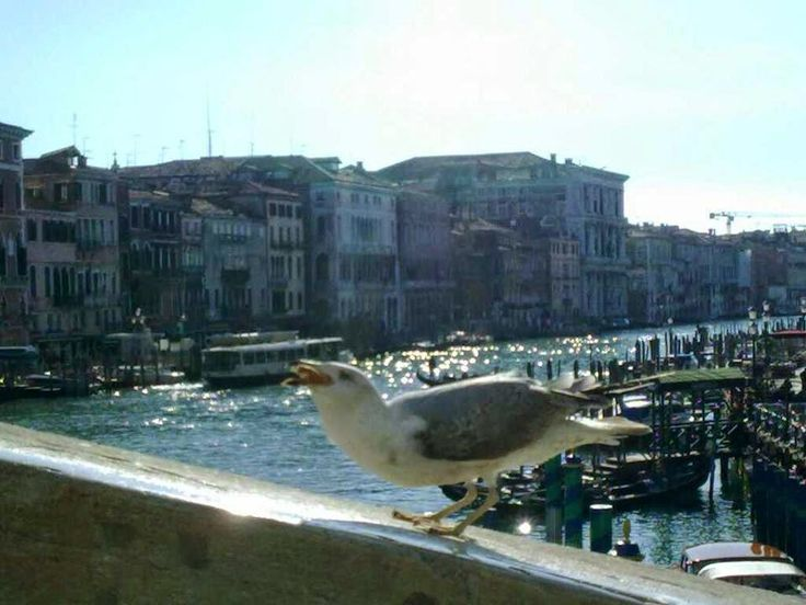 Information, private tours in Venice: pigeon and seagull in Venice